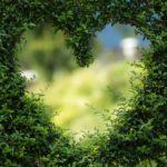 Piękny ,a także schludny zieleniec to zasługa wielu godzin spędzonych  w jego zaciszu w toku pielegnacji.